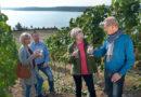 Lausitzer Seenland: Neuer Wein von neuen Bergen