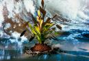 Die Bromelie, die Anti-Schnarchpflanze und Klima-Künstlerin